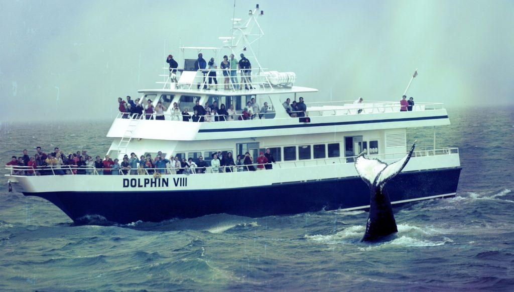 dolphin whalewatch cape cod